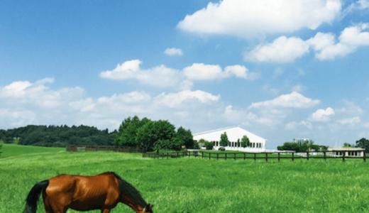 紗栄子が経営する牧場の場所はどこ?コンセプトや利用料金にアクセスまとめ|クラウドファウンディング情報も